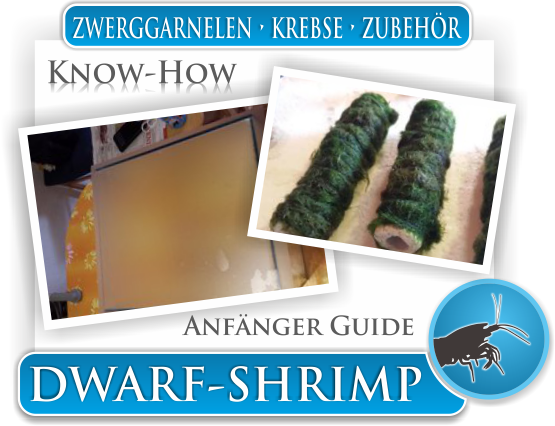 Dwarf Shrimp - Wissen - Know How - Anfänger Guide