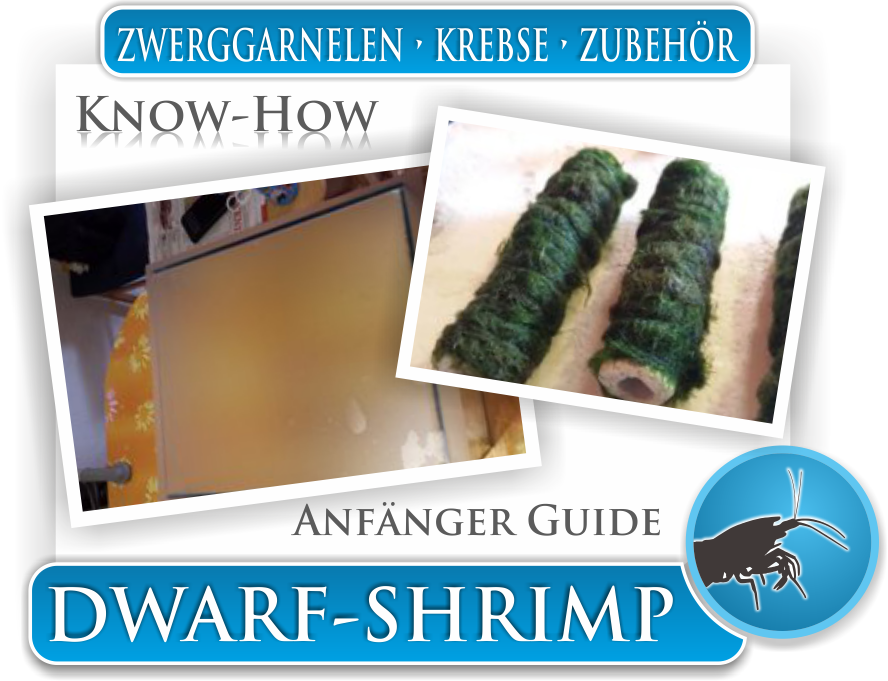 Dwarf Shrimp Know How - Anfänger Guide Zwerggarnelen