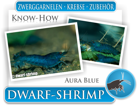 Dwarf Shrimp - Wissen - Know How - Aura Blue