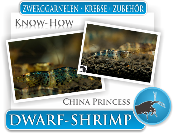 Dwarf Shrimp Know How - China Princess Zwerggarnelen