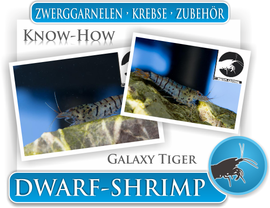 Dwarf Shrimp Know How - Galaxy Tiger Zwerggarnelen