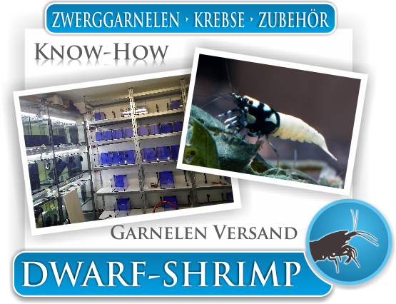 Dwarf Shrimp - Wissen - Know How - Garnelenversand
