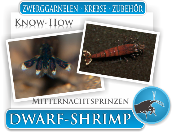 Dwarf Shrimp Know How - Mitternachtsprinzen Zwerggarnelen