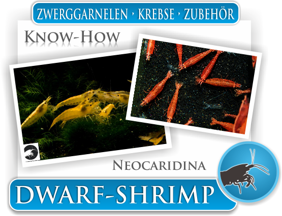 Dwarf Shrimp - Wissen - Know How - Neocaridina
