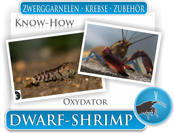 Dwarf Shrimp Know How - Oxydatoren im Zwerggarnelen Aquarium