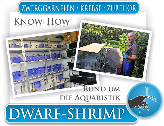 Dwarf Shrimp - Wissen - Know How - Rund um die Aquaristik
