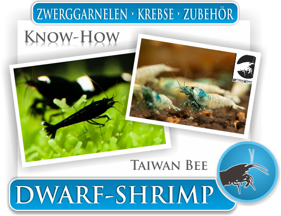 Dwarf Shrimp - Wissen - Know How - Taiwan Bee