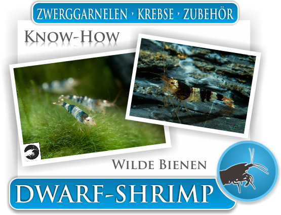 Dwarf Shrimp Know How Wilde Bienen - Zwerggarnelen